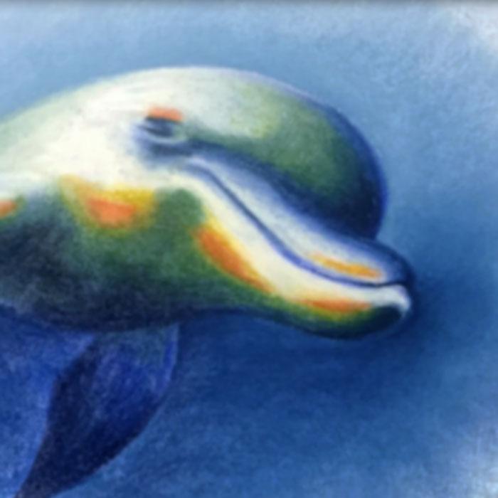 A Dolphin's Tale